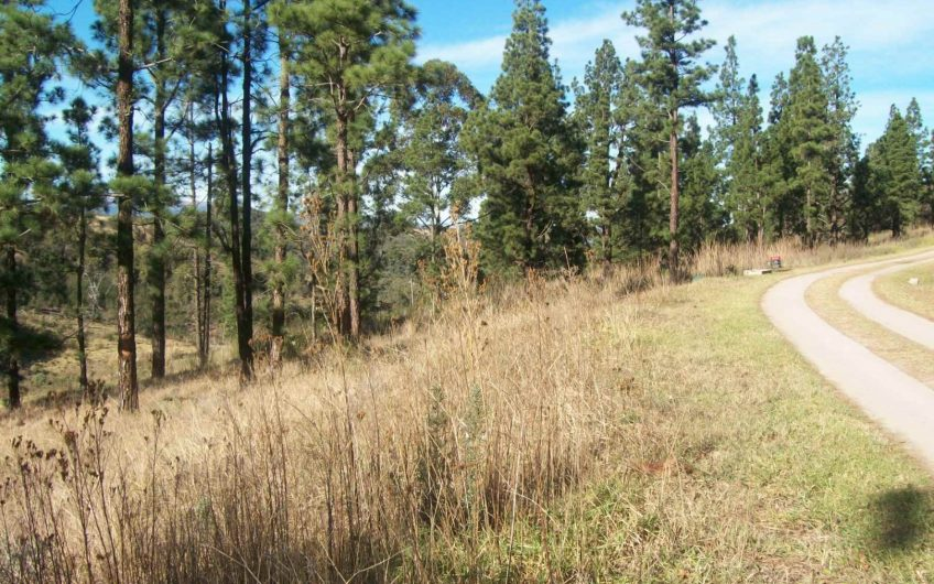 VACANT LAND || Plot On Auction in Katberg